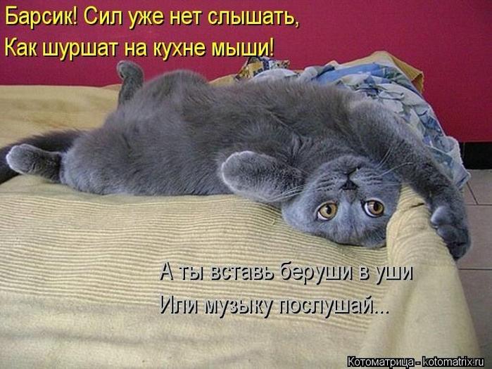 104502330_large_kotomatritsa_B (700x525, 269Kb)