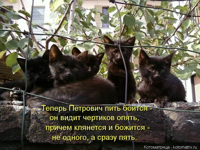 104502332_large_kotomatritsa_I (700x524, 315Kb)