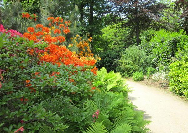 image-2013-07-11-15167258-56-parc-floral-paris (600x426, 344Kb)