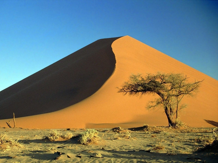 Sand_Dunes_and_Acacia_Tree_Namib_Desert_Namibia (700x525, 274Kb)