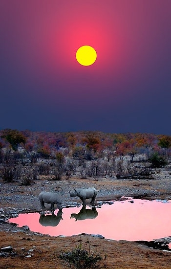Black rhinos at sunset-Etosha National Park, Namibia - by Michael Sheridan (350x550, 117Kb)
