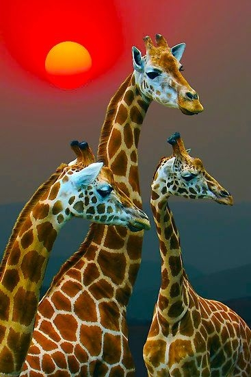 SUNSET WITH GIRAFFES 3 by Michael Sheridan (367x550, 132Kb)