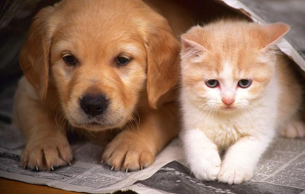 щенок и котенок/4348076_111221 (596x380, 85Kb)