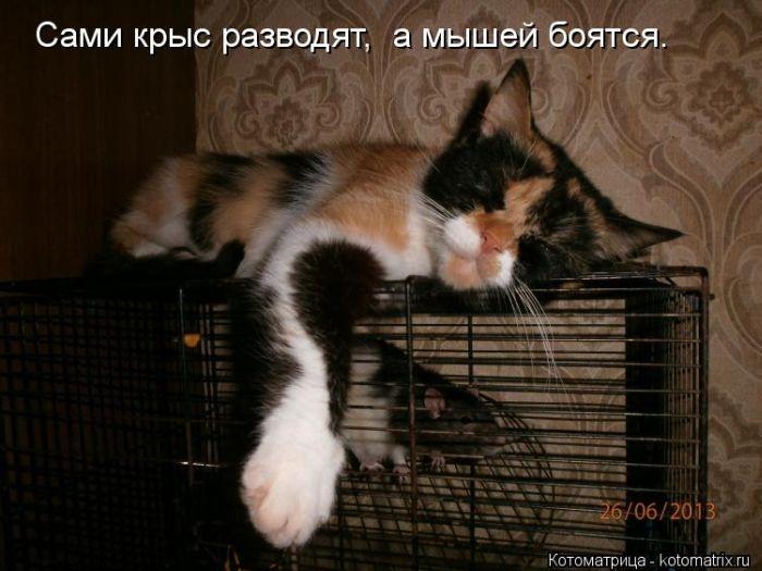 1380476873_kotomatrix_11_1 (700x525, 172Kb)
