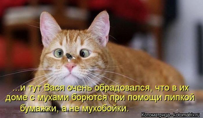 1380476874_kotomatrix_09_1 (700x408, 150Kb)