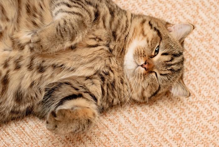 прикольные фото кошек 14 (700x468, 297Kb)