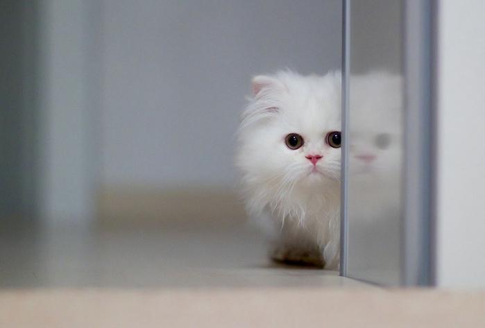 прикольные фото кошек 16 (700x473, 143Kb)