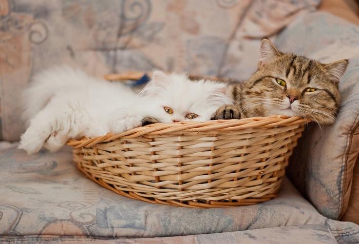 прикольные фото кошек 18 (700x476, 239Kb)
