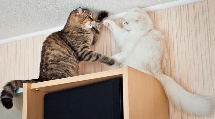 прикольные фото кошек 19 (700x389, 186Kb)