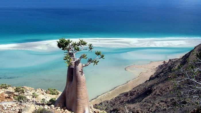 Socotra03 (700x392, 203Kb)