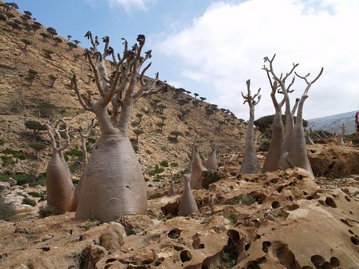 Socotra16 (700x525, 302Kb)