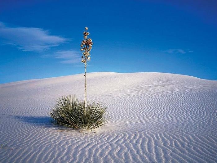 Socotra23 (700x525, 248Kb)