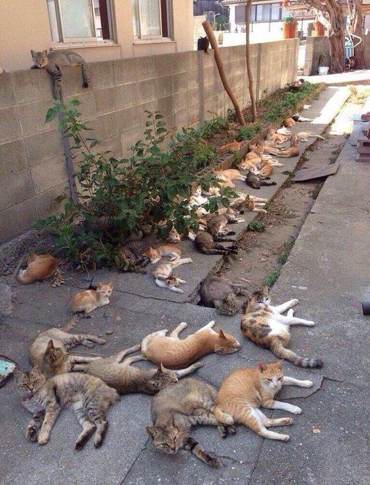 коты (533x700, 108Kb)