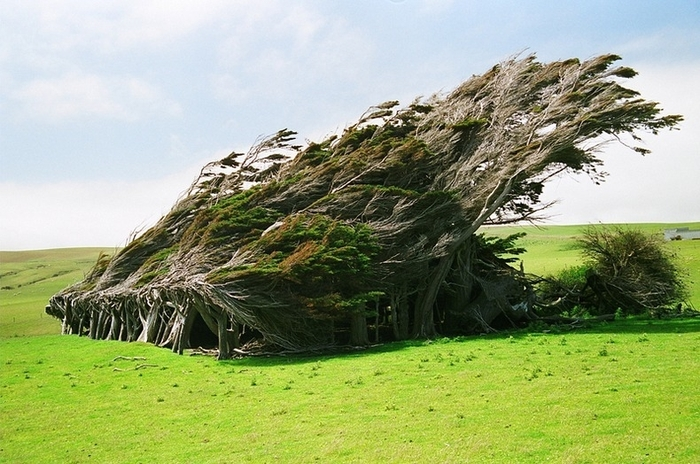 красивые деревья фото 1 (700x464, 275Kb)