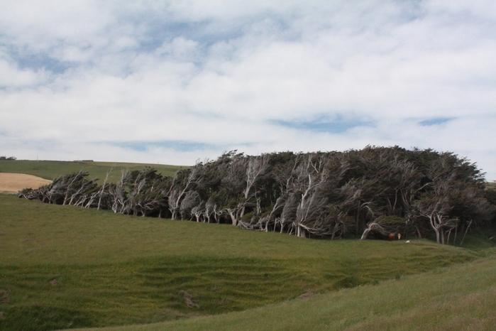 красивые деревья фото 2 (700x466, 208Kb)