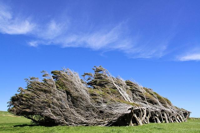красивые деревья фото 8 (640x427, 239Kb)