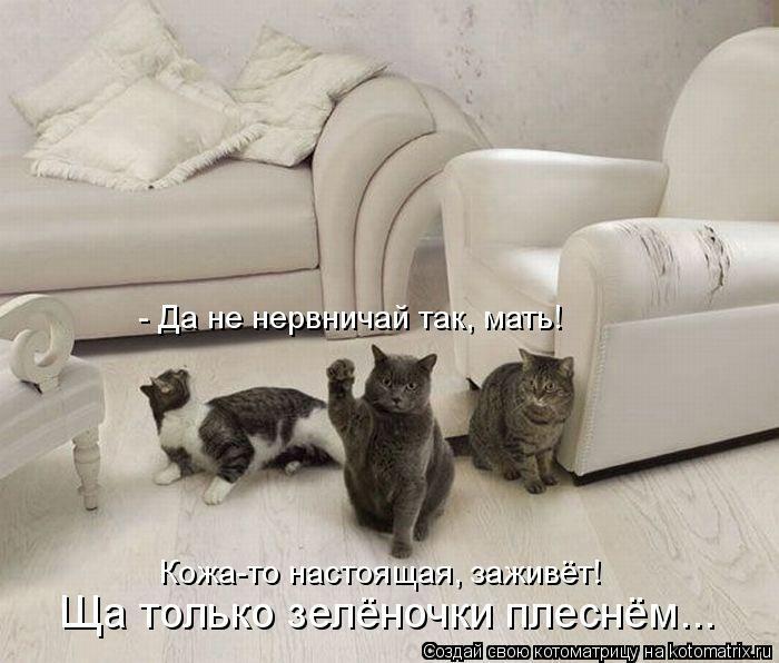 kotomatritsa_1B (700x596, 144Kb)