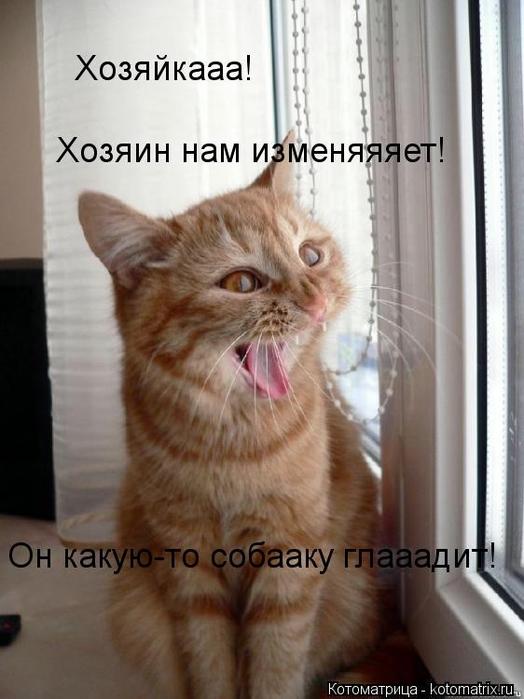 kotomatritsa_A (524x700, 207Kb)