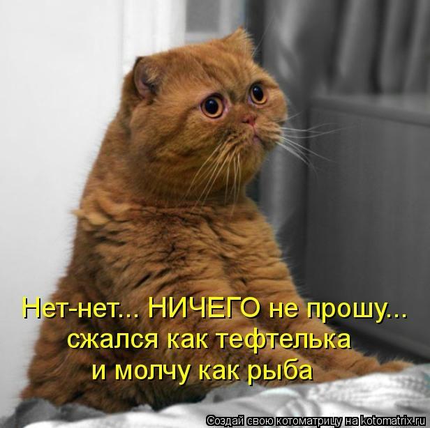 kotomatritsa_c (616x614, 134Kb)