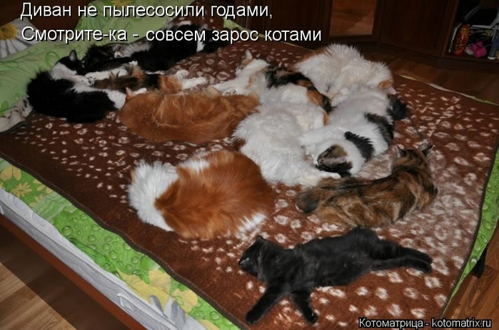 kotomatritsa_CW (700x463, 238Kb)