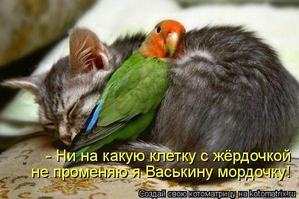 kotomatritsa_kb (598x398, 133Kb)