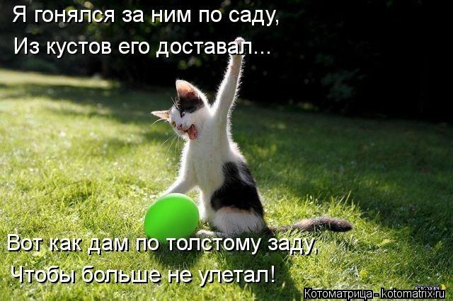 kotomatritsa_Lh (640x426, 163Kb)