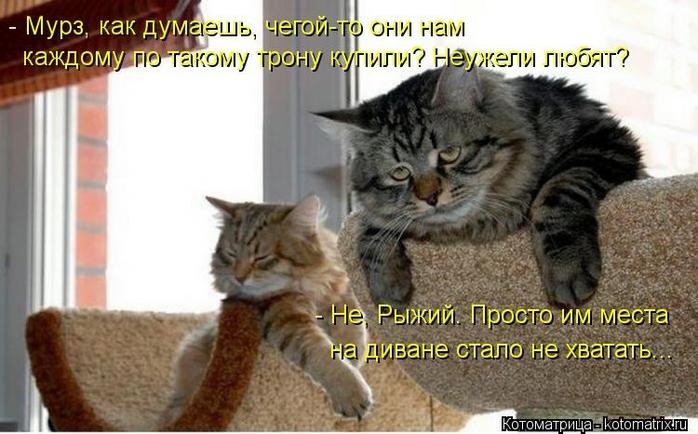 kotomatritsa_Qo (700x434, 214Kb)