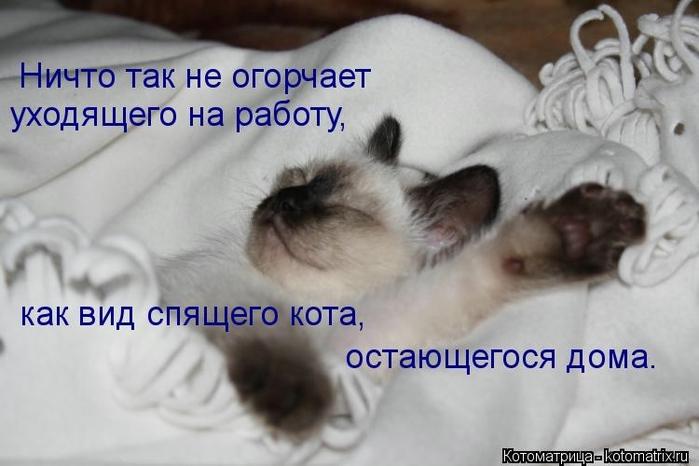 kotomatritsa_UW (700x466, 176Kb)