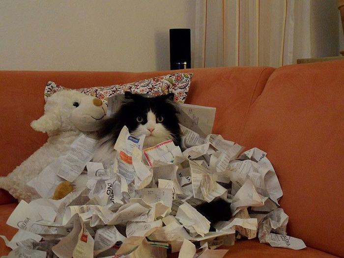 найди кота2 (700x525, 371Kb)