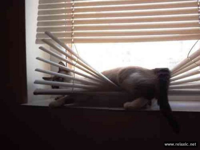 cats-vs-blinds_00015 (640x480, 131Kb)