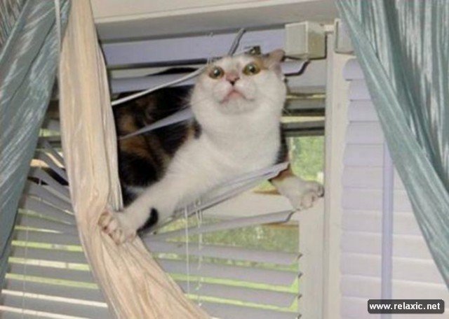 cats-vs-blinds_00016 (640x456, 180Kb)