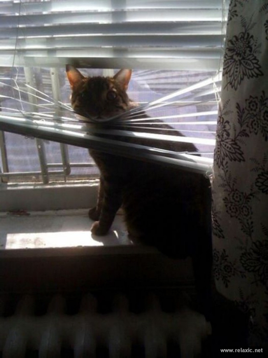 cats-vs-blinds_00018 (525x700, 247Kb)