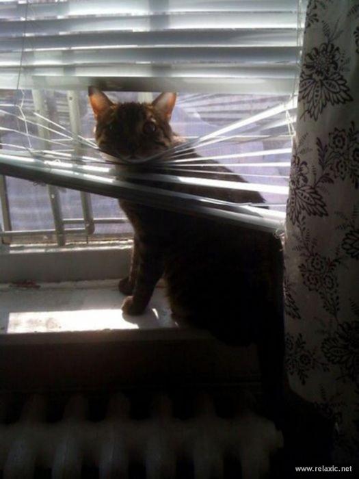 cats-vs-blinds_00018 (525x700, 247Kb)