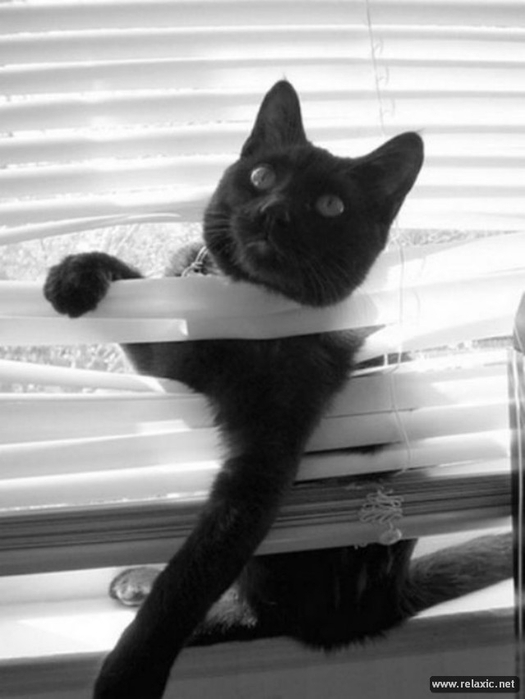 cats-vs-blinds_00020 (525x700, 133Kb)