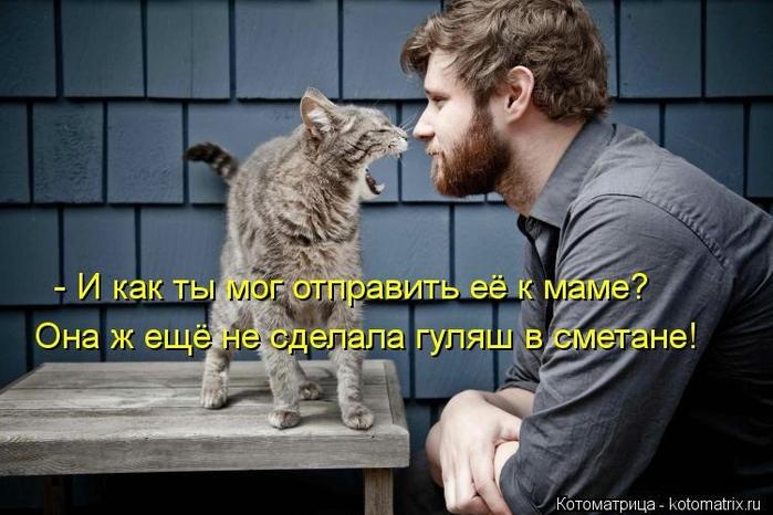 kotomatritsa_6s (700x466, 220Kb)