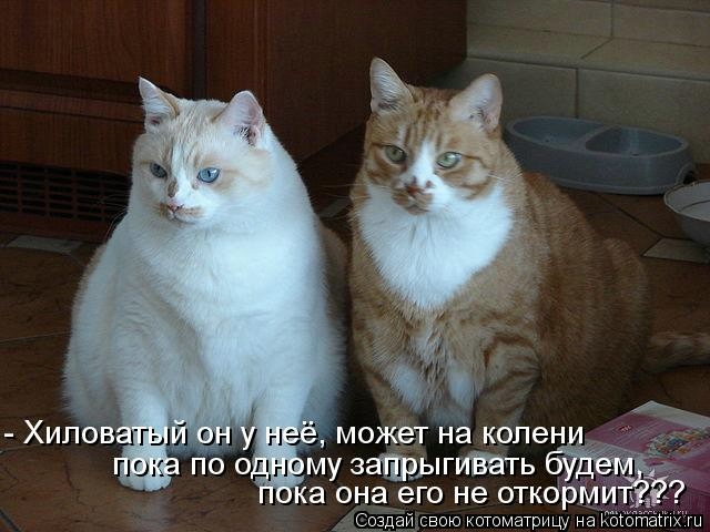 kotomatritsa_M (700x520, 132Kb)