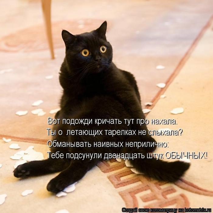 kotomatritsa_uB (700x700, 267Kb)