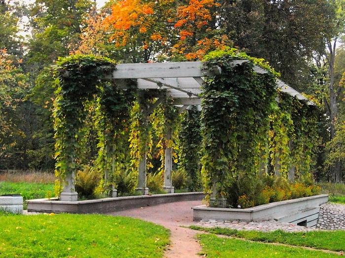 Осень в парке Александрия!