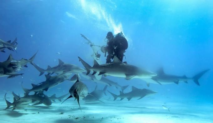 акула фото 2 (680x393, 82Kb)