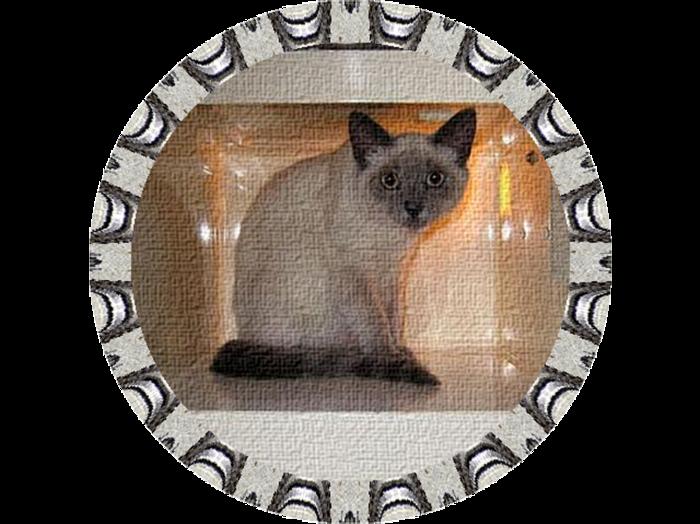 Cats_090 (700x524, 462Kb)