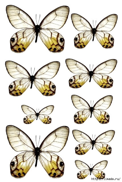 Swirlydoos July 2012 Butterflies white green (429x640, 214Kb)