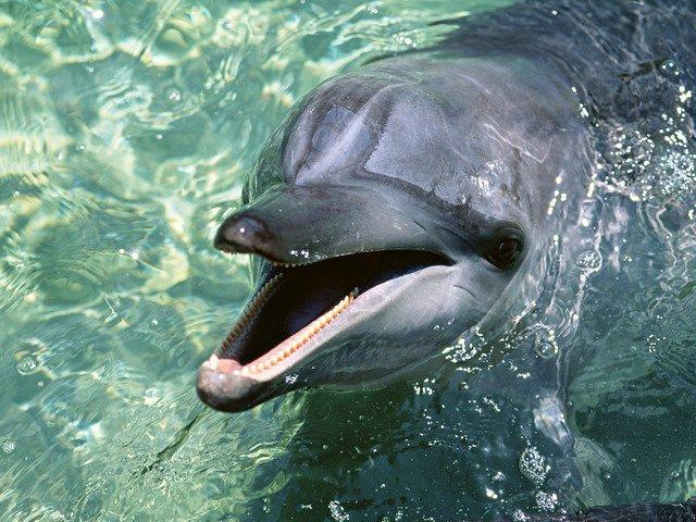дельфины личности/3185107_delfin_foto (640x480, 92Kb)