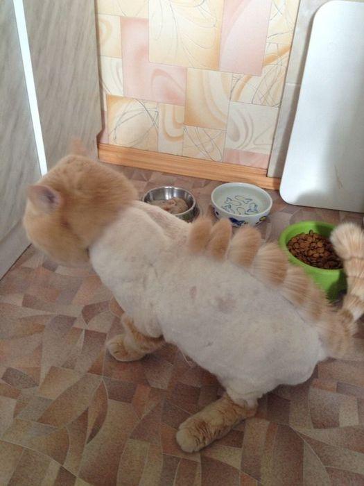 cat_barc (525x700, 44Kb)