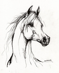Превью arabian-horse-drawing-38-angel-tarantella (565x700, 278Kb)