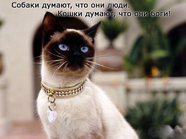 1381128549_www.radionetplus.ru-20 (622x466, 130Kb)
