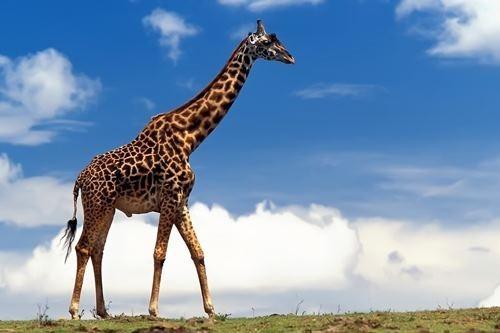 Крупнейшие существа на Земле