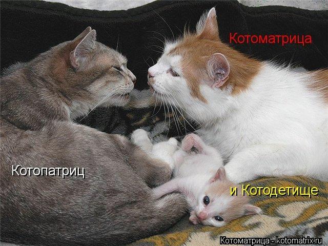kotomatritsa_vy (640x480, 182Kb)