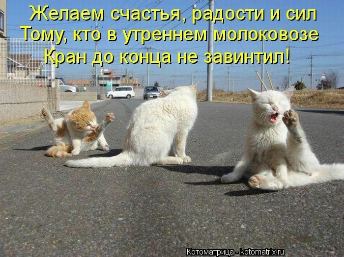 kotomatritsa__V (700x524, 219Kb)