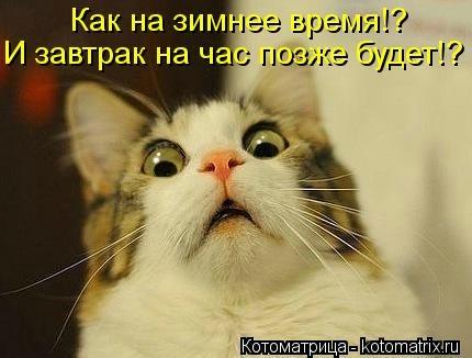 kotomatritsa_5w (430x326, 70Kb)