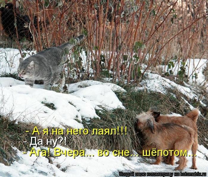 kotomatritsa_IF (700x595, 396Kb)